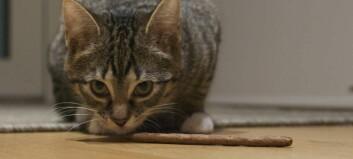Dyrevernlaget: – No er det heilt på grensa