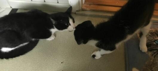 Glenn Tony tok med seg feil katt heim, no treng han hjelp: – Er prikkande like