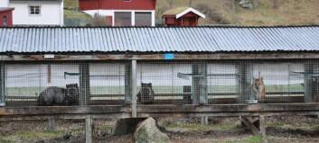 Listhaug kuttar støtten til pelsdyrproduksjon