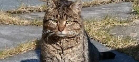 Veit du kven som eig denne katten?