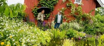 Frå småbruk til hagedraum