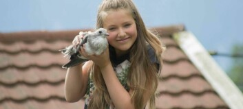 Antonina (12) redda måkeunge