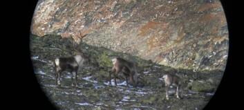 Reinjegerane i Nordfjella slepp fellingsavgift