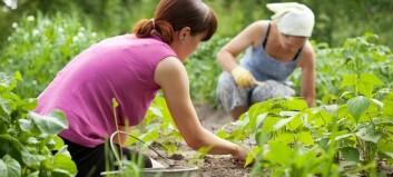 Planlegg grønsakhagen no