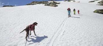 Vårtur med ski på beina