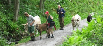 Dyreliv i Avdalen og Vetti
