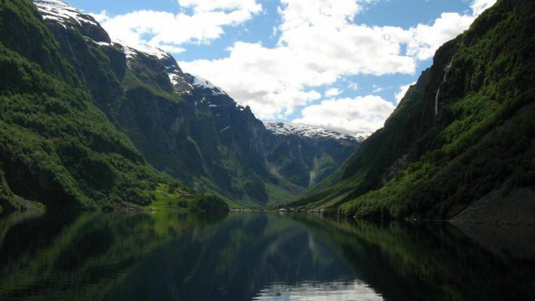 ATTGROING: Dersom kulturlandskapet rundt fjordane held fram med å gro igjen, kan både Geiranger og Nærøyfjorden kome til å miste verdsarvstatusen.Foto: Wikipedia commons.