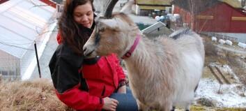Terapigeiter frå Aurland kåra til Noregs dyreheltar