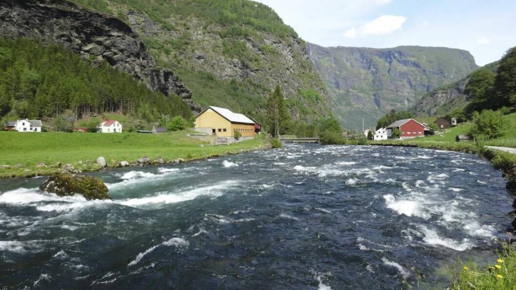 FLAUMSIKRING: Forskarar skal sjå på korleis ein betre kan sikre elvar mot flaum. Aurlandselva og Flåmselva er begge «forsøkskaniner». Foto: Wikipedia commons.
