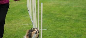 Elleville hundedagar i Årdal: – Det er kjempespanande!