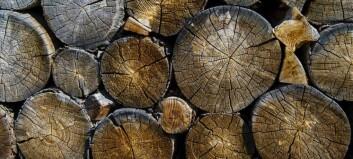 Får ein halv million til forsking på tømmerlogistikk