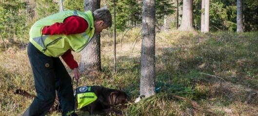 Stort behov for fleire hundar som kan finne sauekadaver