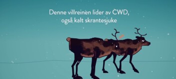 Denne videoen syner korleis skrantesjuka smittar mellom hjortedyr