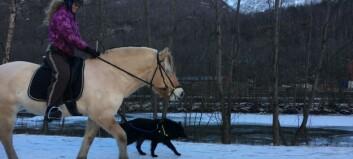 Hestar, ryttarar og hund stod for lystig opptog gjennom Utladalen denne laurdagen