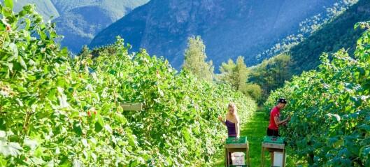 Fruktduoen i Sogn har laga ny fusjonsplan utan nordfjordingane