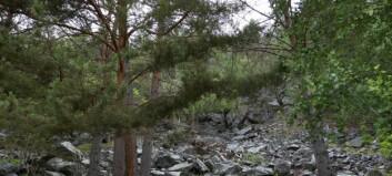 Fylkesmannen vil gjera Tingastad i Sogndal om til naturreservat