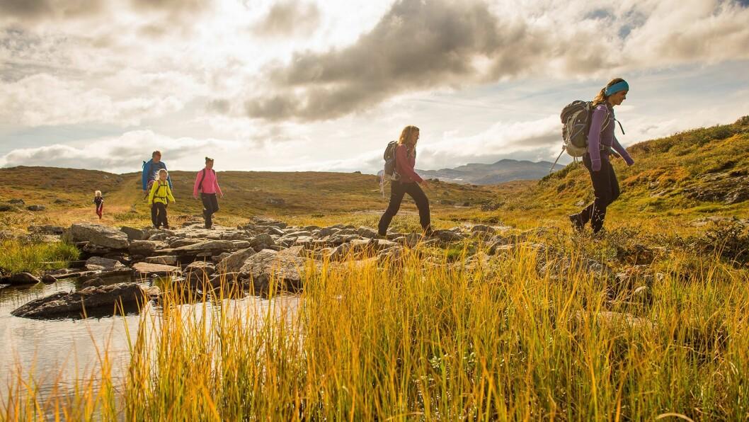 TURISTMAGNET: Bedrifter i Lærdal og Vang håper at Kongevegen over Filefjell skal lokka vandreturistar frå heile verda til området.