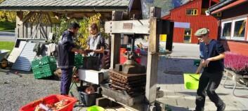 Eplepressing og humlebolbygging på open økologisk gard