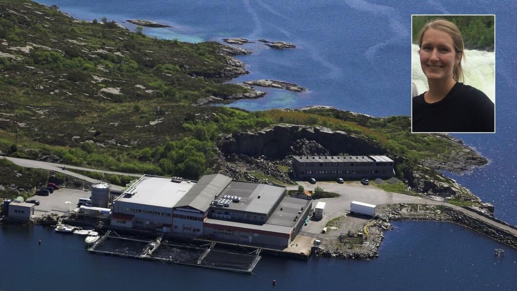 Firda Seafood Group har utvida områder, og vil no søke om å få lov til å gro tang og tare.