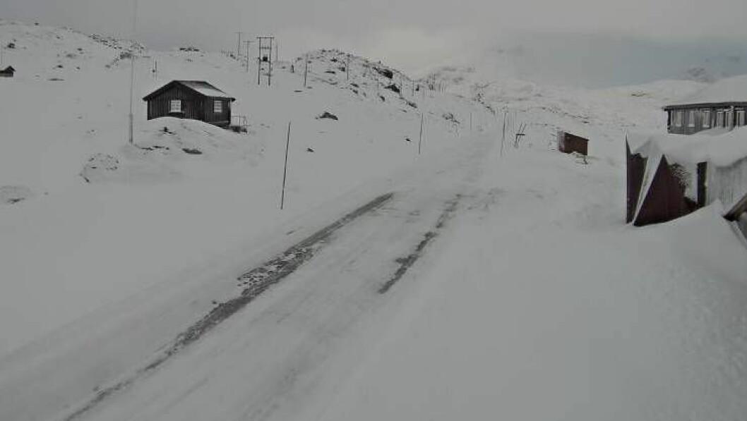 VINTERLEG: Biletet er teke klokka 09:53 onsdag morgon av eit webkamera på Sognefjellshytta 1400 meter over havet.