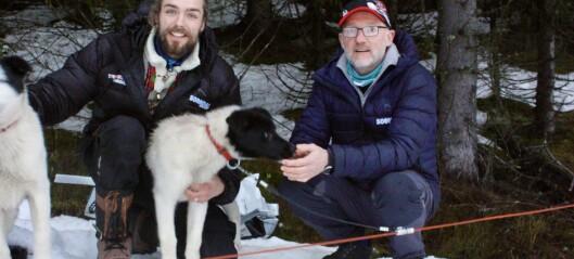 No vil desse teste hundekjøring i Sogndal Skisenter