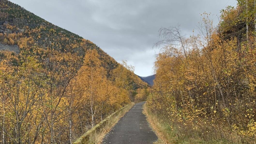 Til våren vil stien som strekk seg frå Steiggjatunellen til 50-sona på Årdalstangen, også bli lyssett.