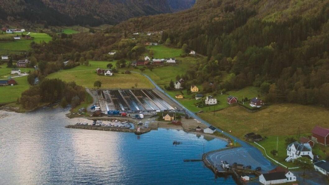 LANDBASERT: Sogn Aqua har spesialisert seg i landbasert produksjon av kveite og leverer i hovudsak til restaurantmarknaden.