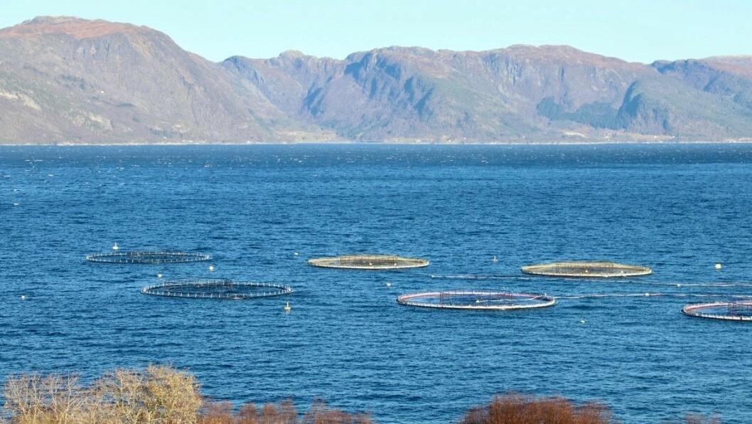 AVGIFT: Produksjon av laks, aure og regnbogeaure vil få ei produksjonsavgift på 40 øre per produsert kilo fisk i forslaget frå regjeringa.