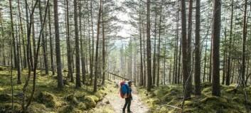 Rett frå overnatting i skogen til morgonmøte på heimekontor