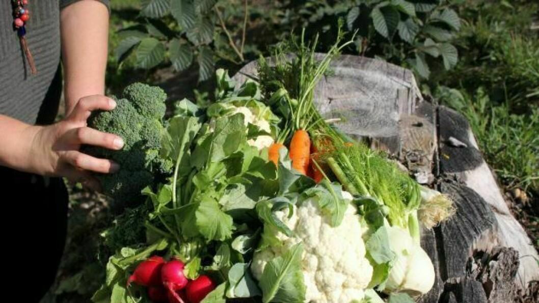 GRØNSAKER: Brekke Bygdekvinnelag meiner fleire av oss vil ha stor nytte av å vite korleis vi set poteter og dyrkar gulrøter.