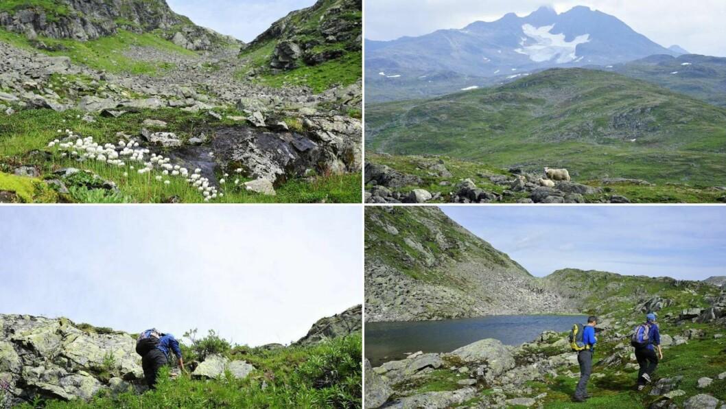TUREN: På heile vegen opp pusta torevêr og regn dei i nakken, men då me kom på toppen løyste det seg litt opp.