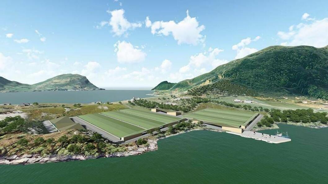 ORTNESET: Det vert søkt om ein årleg produksjon av totalt 2000 tonn atlantisk kveite. Anlegget skal liggje vendt mot Sognefjorden.