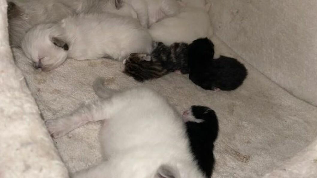 HEIM: I ein flokk på fem kattungar, har kattungane funne seg til rette.