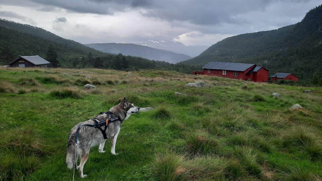 Hunden Zitah er modell vekas foto i Sogn. Ho var på tur i Offerdalen saman med Lasse Thomassen.