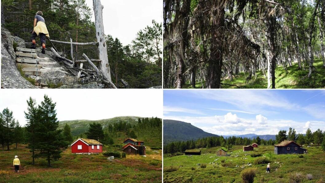 ÅRDAL: Turen byr på flott og variert Vestlandsnatur.