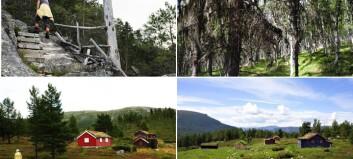 Helgaturen: Gamle stølshus og Kvitingsmorki