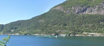 Lakserømming i Sognefjorden. Fiskedirektoratet ønskjer tips