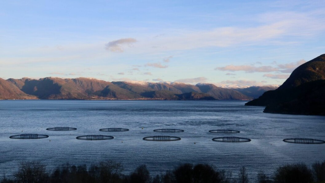 SOL: Fint vintervêr i ytre delar av Sognefjorden.