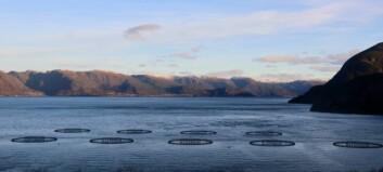 Fredag bada Sognefjorden i vintersol. Slik blir helgevêret.