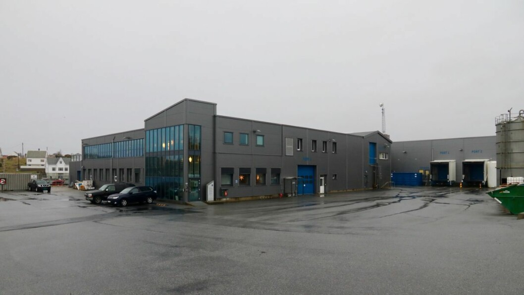 NYTT: Firda Seafood Group på Byrknesøy har fått løyve til å dyrke tang og tare i Gulen.