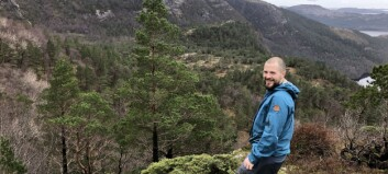 Her finn ein blant anna vestnorsk regnskog – no skal området bli naturreservat