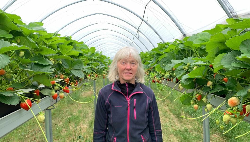 JORDBÆR: Olaug Skjerdal er ein av mange bønder som gjerne skulle hatt meir utanlandsk arbeidskraft i år.