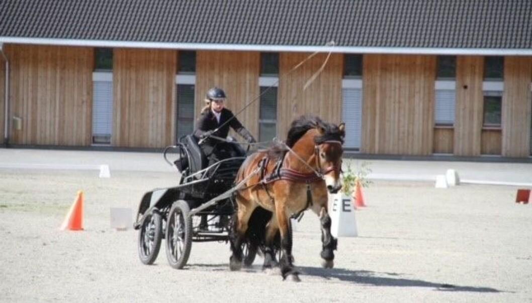 DANMARK: No skal hesten for fyrste gong konkurrera i Danmark.