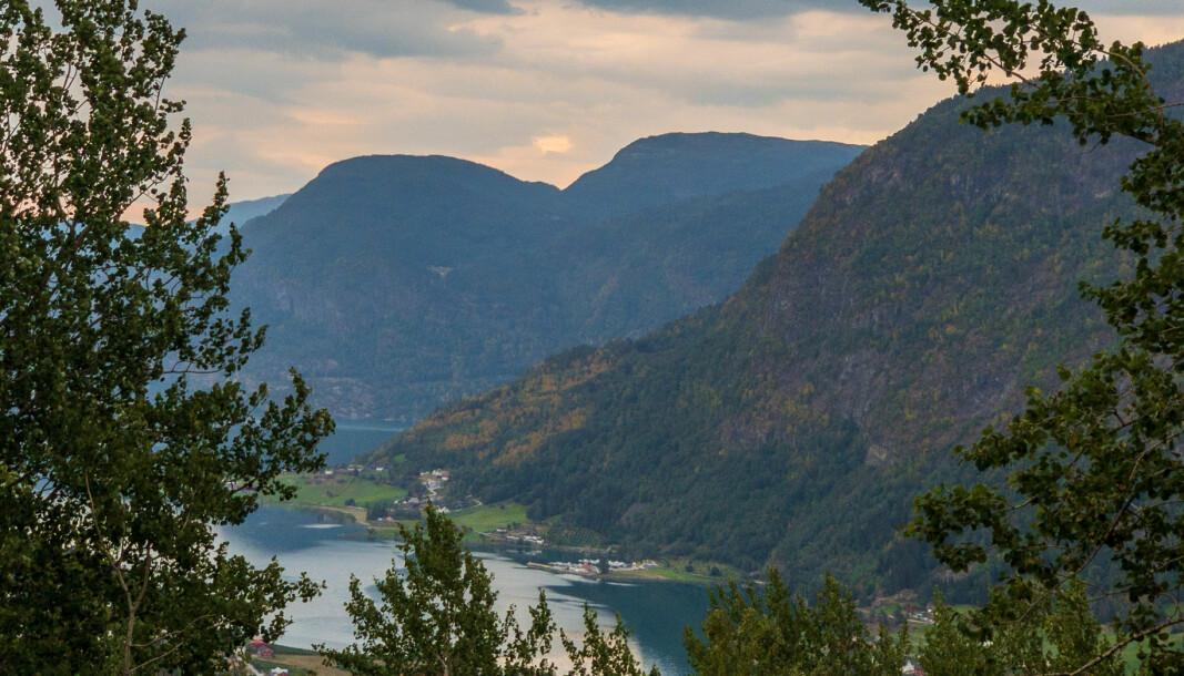 SOGNDAL: Trea i fjellsida er blitt gule etter ein lengre periode med lite regn og høge temeperaturar.