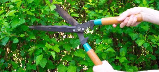 Tenk tryggleik og klipp hekken før skulestart