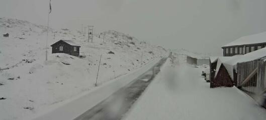 Trafikale utfordringar på Sognefjellet: – Mest sannsynleg ueigna dekk