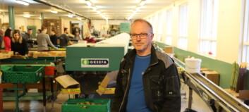 Siste haust med pakking på Leikanger: – Frukthausten har vore god og hektisk